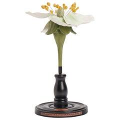 Botanic Model, Italy, 1920