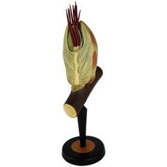 Botanical Ceramic Educational Blooming Hazelnut Intersection