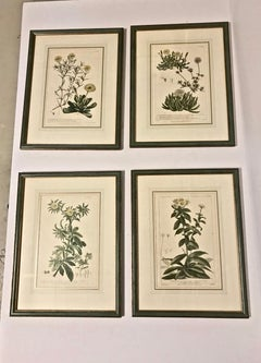 Botanical Engravings, circa 1750, Set of 4
