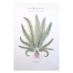 Botanical Fern Prints, Collection of Twenty-Six Botanical Framed Fern Prints