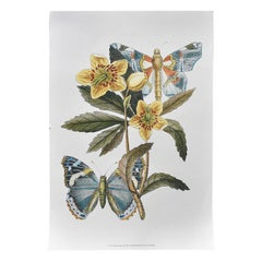 Botanical Flower and Butterfly Print