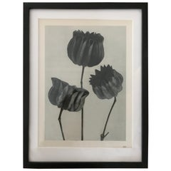 Botanical Photogravures by Karl Blossfeldt, a Pair