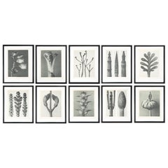 Botanical Photogravures by Karl Blossfeldt, Berlin, 1929, Set of 10