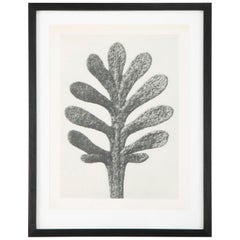 Botanical Photogravures by Karl Blossfeldt, Berlin, 1929, Set of 4