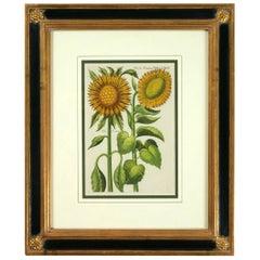 Botanical Sunflower Engraving, Michael Bernhard Valentini, 1719