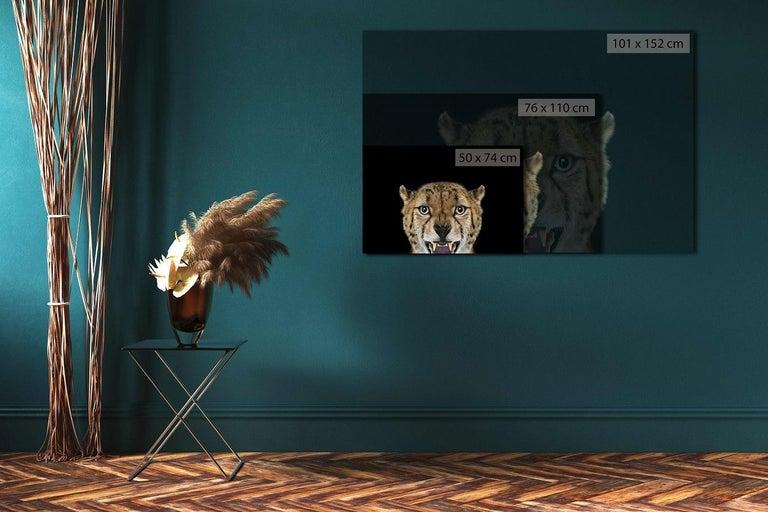 Cheetah #3 by Brad Wilson - Animal Art, Studio Photography, Portrait, Feline For Sale 1