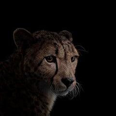 Cheetah #8