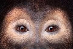 Orangutan #10, Los Angeles, CA, 2011