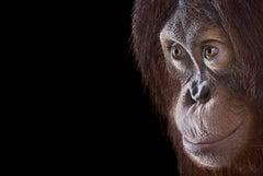 Orangutan #3, Los Angeles, CA, 2011