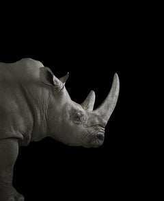 Rhinoceros #2, Albuquerque, NM, 2013 - Animal Portrait Photography