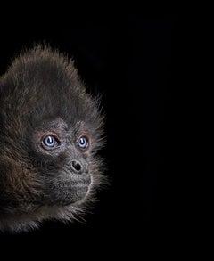 Spider Monkey #3, Los Angeles, CA by Brad Wilson - Animal Photography