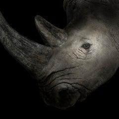 White Rhinoceros #4, Albuquerque, NM, 2013