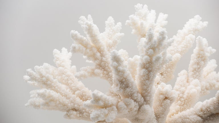 Branch coral mounted on a turned wooden base. 13