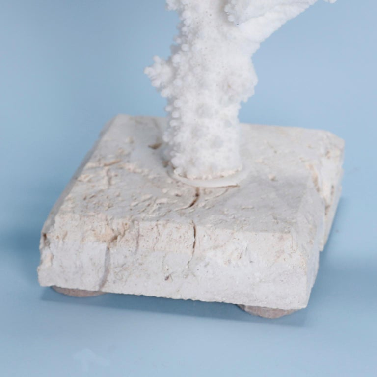 Solomon Islands Branch Coral Sculpture on Coquina Stone For Sale