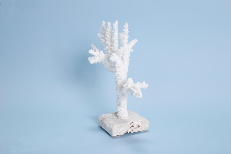 Branch Coral Sculpture on Coquina Stone In Good Condition For Sale In Palm Beach, FL