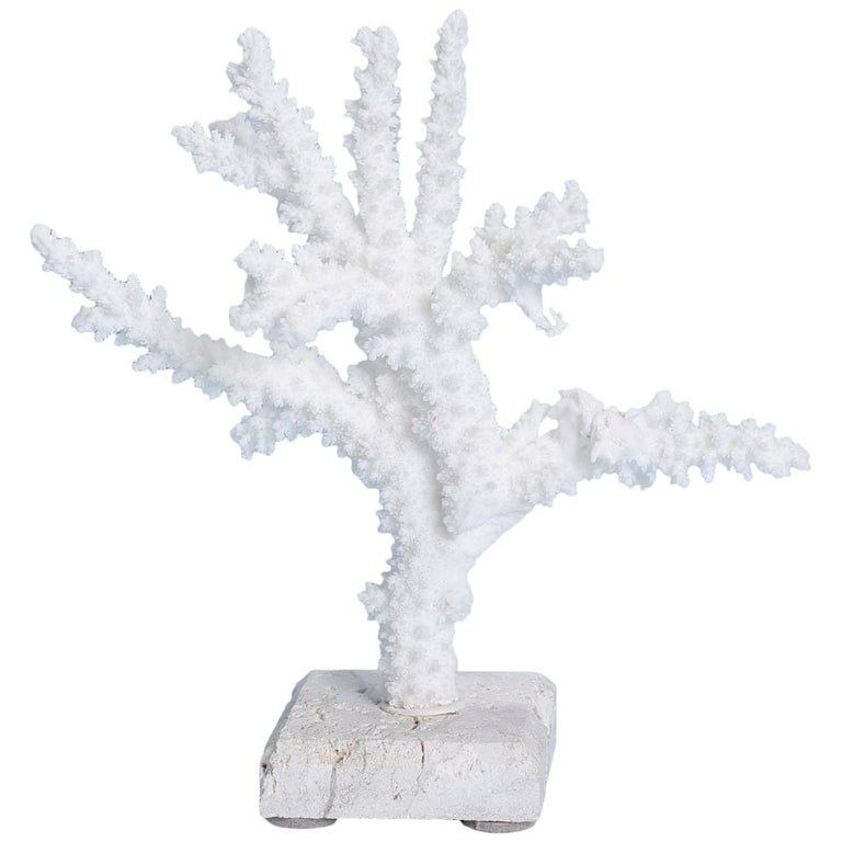 Branch Coral Sculpture on Coquina Stone For Sale