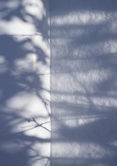 Shadow Legacy no. 1 - Blue & white abstract snow tree environmental landscape