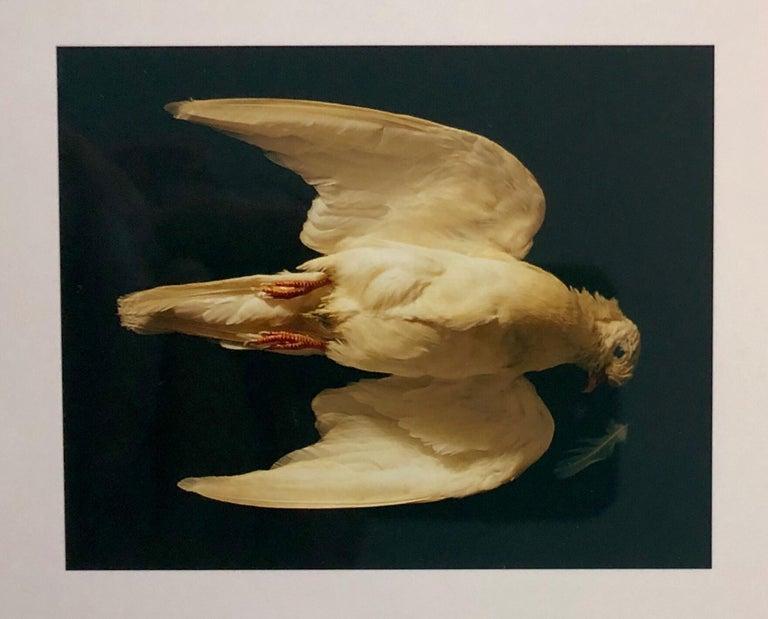 Brenda Zlamany Color Photograph - Birds, Cibachrome Photograph Print, NFS Sample Conceptual Taxidermy Art