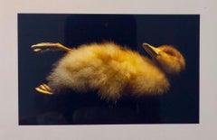 Birds, Cibachrome Photograph Print, Signed Conceptual Art
