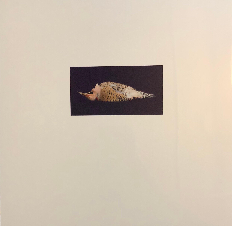 Birds, Cibachrome Photograph Print, Signed Conceptual Art