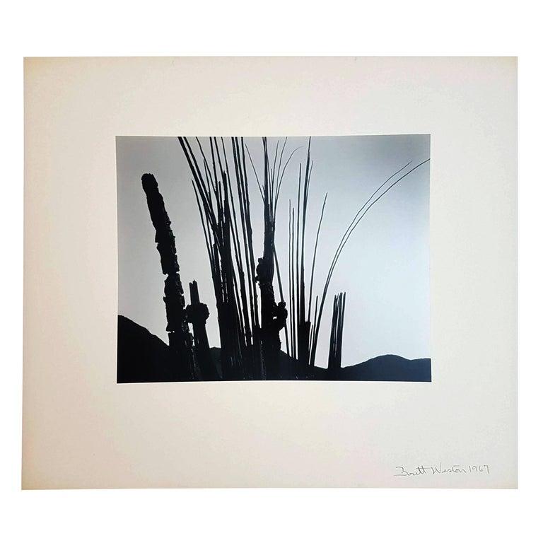 Brett Weston, Baja California, Portfolio with 15 Photographs For Sale 4