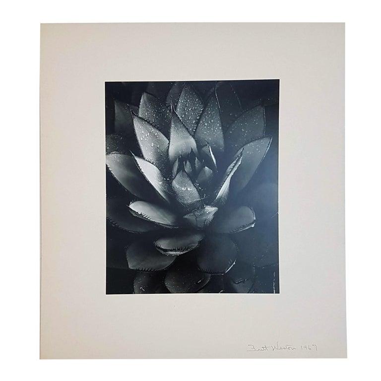Brett Weston, Baja California, Portfolio with 15 Photographs For Sale 6