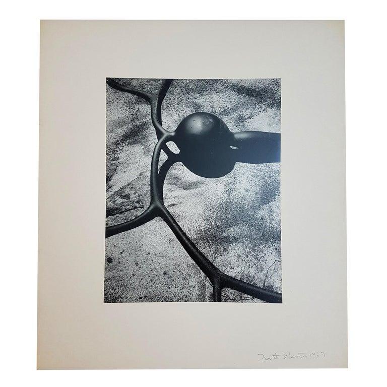 Brett Weston, Baja California, Portfolio with 15 Photographs For Sale 10