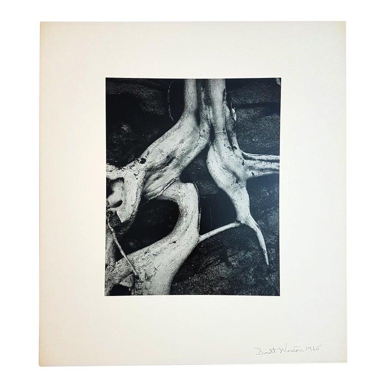Other Brett Weston, Baja California, Portfolio with 15 Photographs For Sale