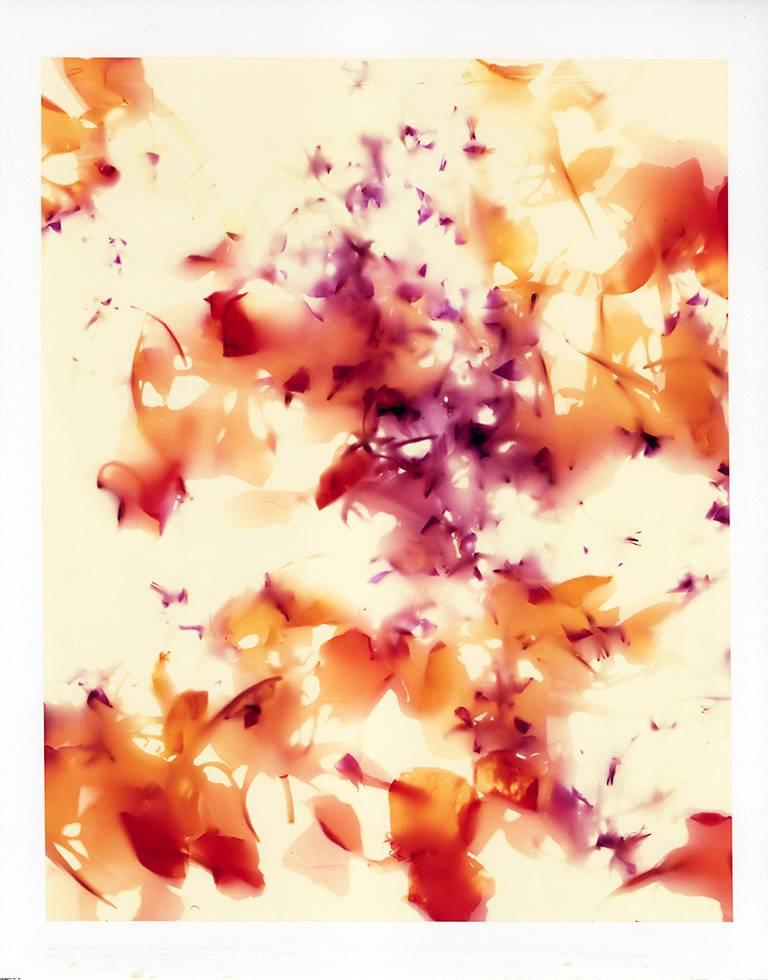 Brian Buckley Abstract Photograph - Edible Flower I