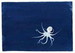 Octopus (Ascend)
