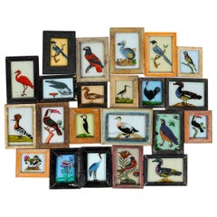 Brightly Colored Framed Indian Bird Painting, 20th Century