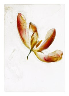 Is there something else though  – Brigitte Lustenberger, Flower, Still Life