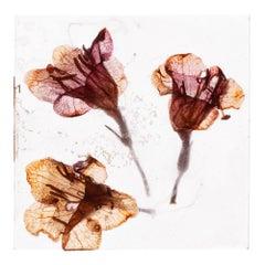 It's all a dream, baby – Brigitte Lustenberger, Flower, Still Life, Colour