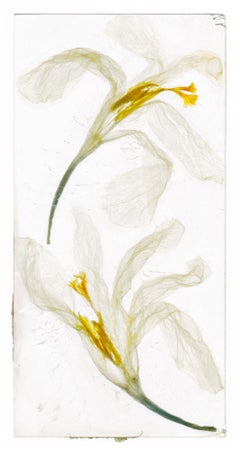 I watched her dancing by the window – Brigitte Lustenberger, Flower, Still Life