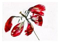 In the longing rush of air – Brigitte Lustenberger, Flower, Still Life, Colors