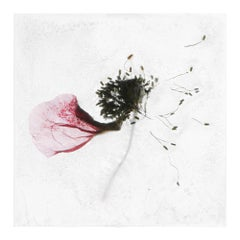 Between two precious fantasies – Brigitte Lustenberger, Flower, Still Life