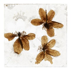 This Kind Of Promise – Brigitte Lustenberger, Flower, Still Life, Art, Flora