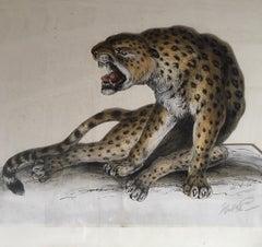 Cheetah Antique Watercolour, British Artist, Original Painting