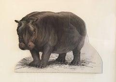 Hippo Antique Watercolour, British Artist, Original Painting