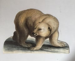 Polar Bear Antique Watercolour, British Artist, Original Painting