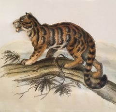 Tiger Antique Watercolour, British Artist, Original Painting