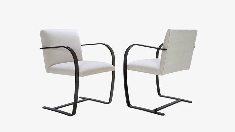 Mid-Century Modern Brno Flat-Bar Chairs in Dove Velvet, Obsidian Gloss Frame, Set of Ten For Sale