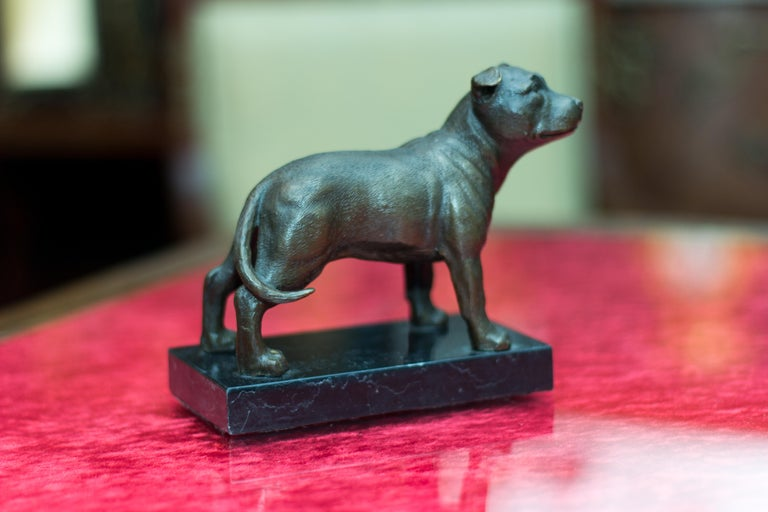 Bronze Dog Sculpture Staffordshire Bull Terrier on Marble For Sale 6