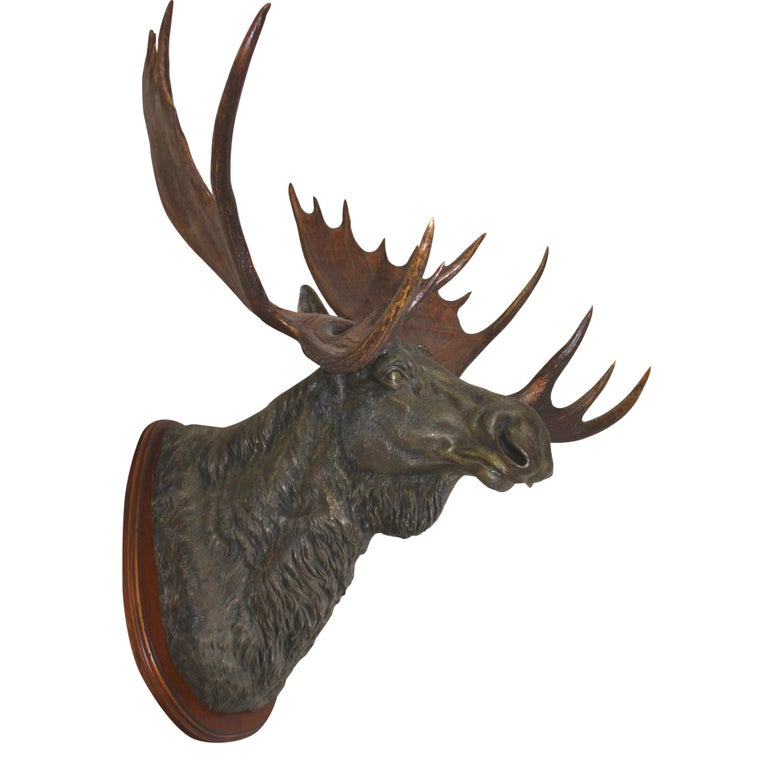 Expertly cast by artist Brad Ham, this sculpture showcases a bronze moose with American moose antlers mounted on a walnut plaque in a large, aggressive, forward facing position. Antlers were naturally shed and harvested.