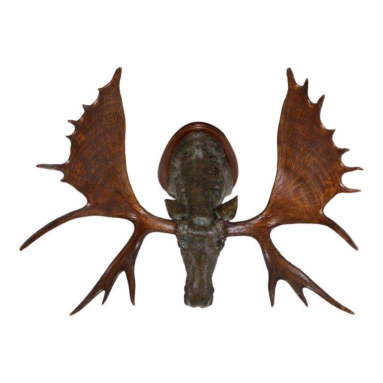 Cast Bronze Moose with Antlers on Walnut Wall-Mount Plaque For Sale