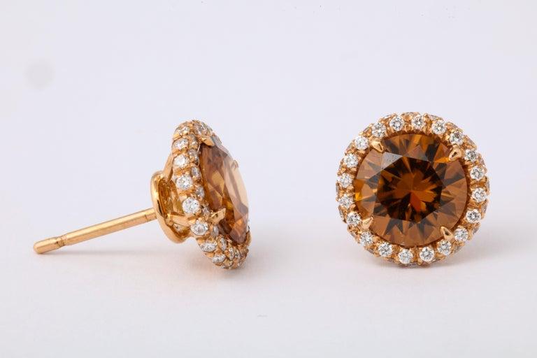 Women's Brown Zircon Diamond Rose Gold Earrings For Sale