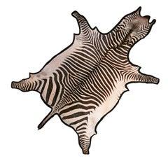 Burchell Zebra Skin Rug