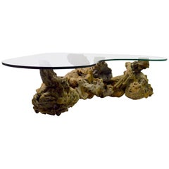 Burl Root Glass Top Coffee Table