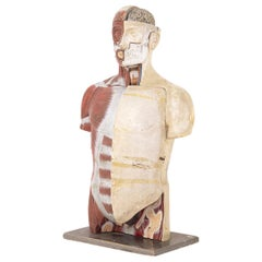 Bust Vintage Medical Didactic Anatomic by Paravia Torino