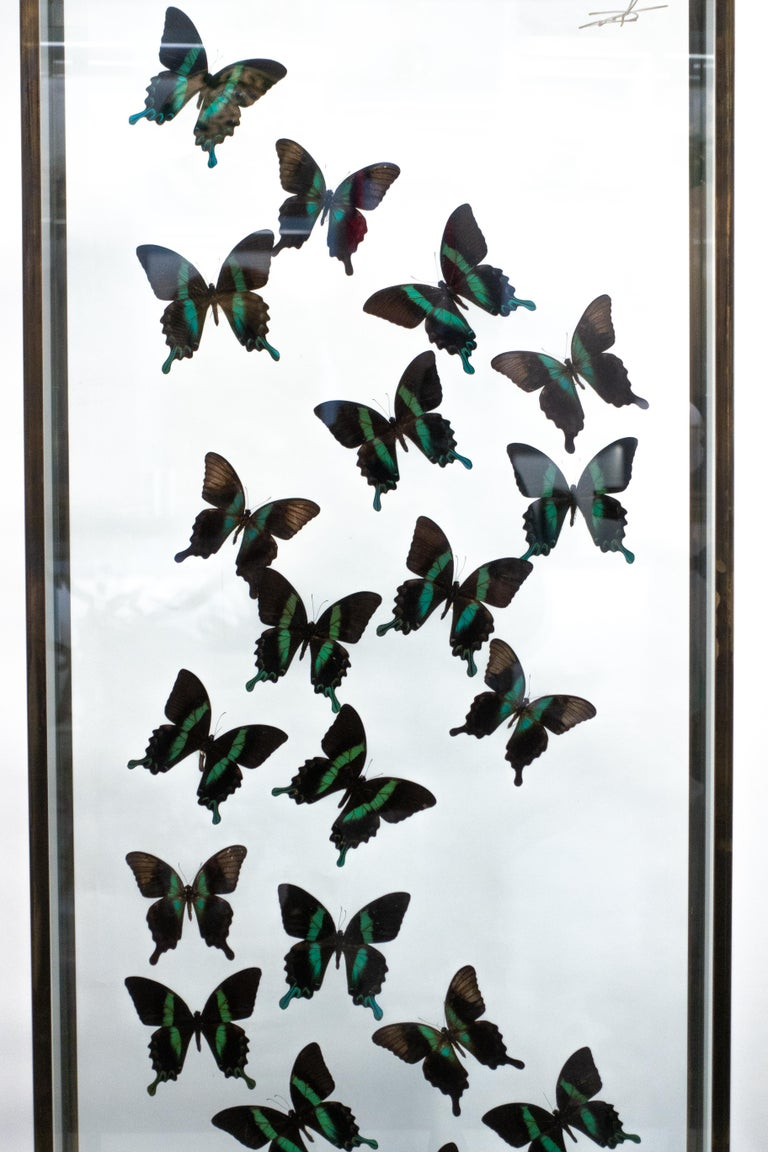 Butterflies in Flight Black and Green with Blue Tips Mounted In Good Condition For Sale In New York, NY